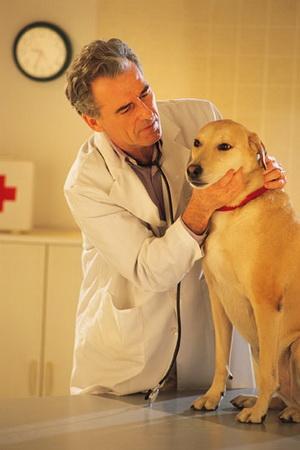 диагностические методы определения нарушения здоровья собаки