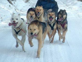 духательные пути, дыхание и кровообращение собаки
