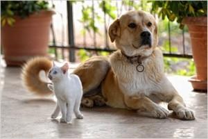 Фен-шуй домашних животных