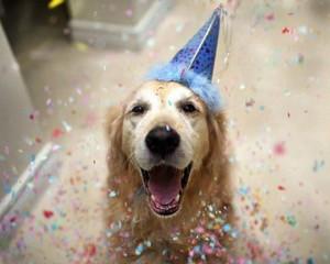 Как сделать вашу собаку счастливой