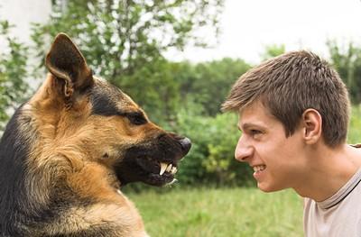 Как себя вести, если напала собака
