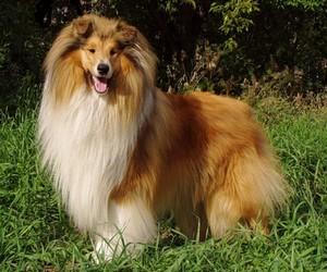 Как ухаживать за длинношерстными собаками