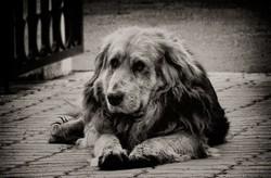 Как ухаживать за немолодой собакой