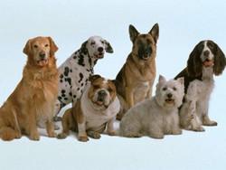 10 умных пород собак