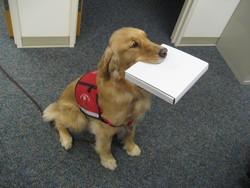Как порода собаки влияет на ее поведение