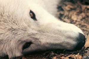 Мозг собаки - самый активный орган