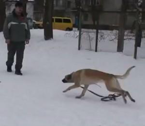 Опыт обучения собаки выполнению команды ко мне