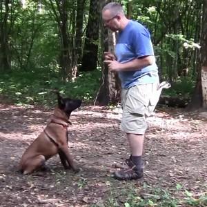 Опыт обучения собак команде ищи