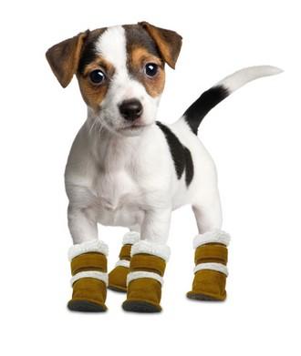 Особенности зимнего ухода за лапами собаки