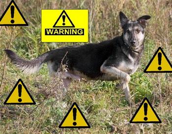 опасность для вашей собаки