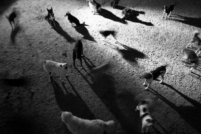 окружающая среда, которая опасна для здоровья собаки