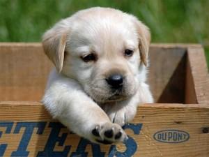От щенка до собаки