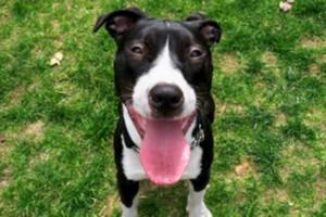 Популярные клички и породы собак