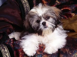 Породы собак рекомендованные для содержания в квартирах