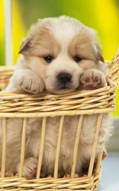 Потребности щенка