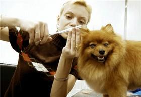 Правила ухода за шерстью собак