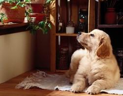Правильное содержание собаки в квартире