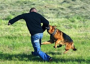 Собака проявляет агрессию к хозяину