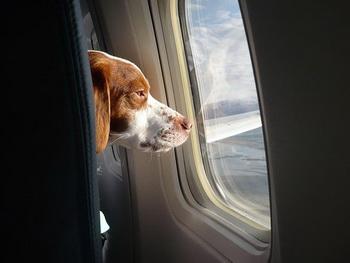 Путешествие на самолете с собакой