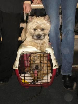 путешествие вместе с собакой
