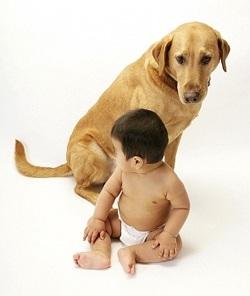 Ревность собаки к новорожденному