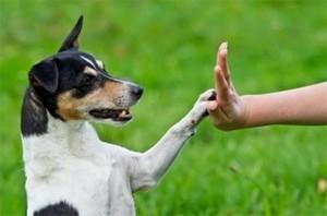 Собачий язык движений