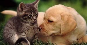 Терапия собаками и кошками