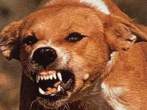 Вакцина против бешенства у собак: побочные эффекты