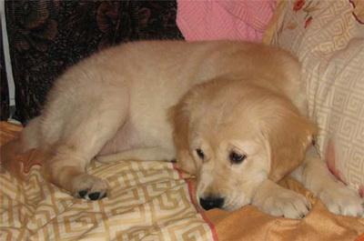 Заболевание и расстройства собаки